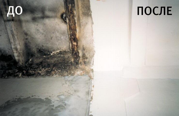 Как вывести плесень со стен в домашних условиях